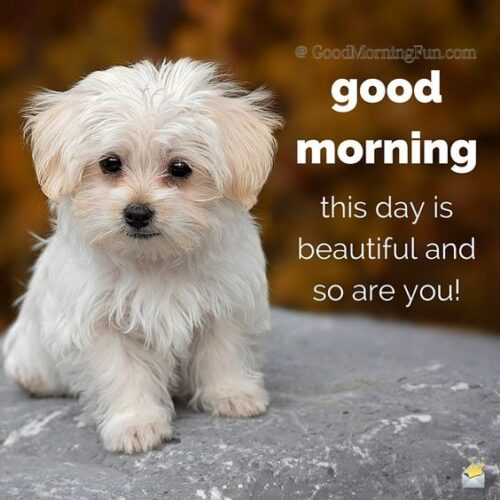 Good Morning Puppy Image