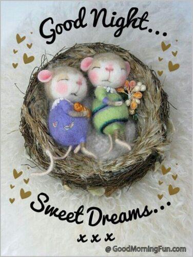 Good night and sweet dreams my darling