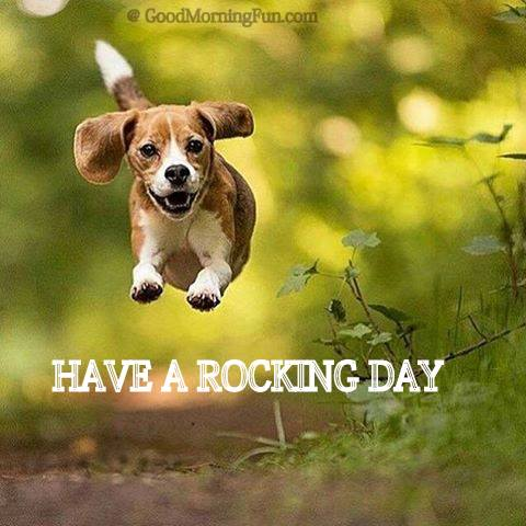 Have rocking day running dog