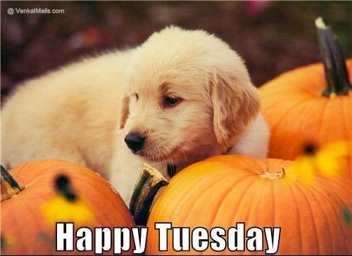 Cute Happy Tuesday Picture