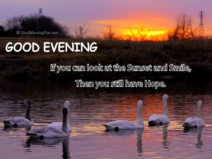 Good Evening Ducks
