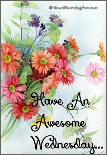 Have an Awesome Wednesday