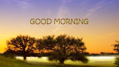 Good morning sun HD wallpapers.
