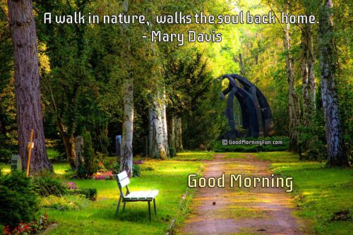 A walk in nature, walks the soul back home - Nature Quotes