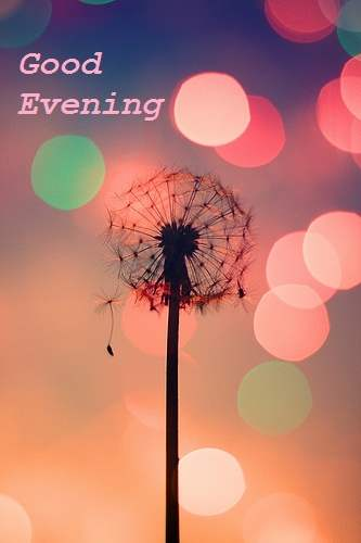 Good Evening Beautiful Tree