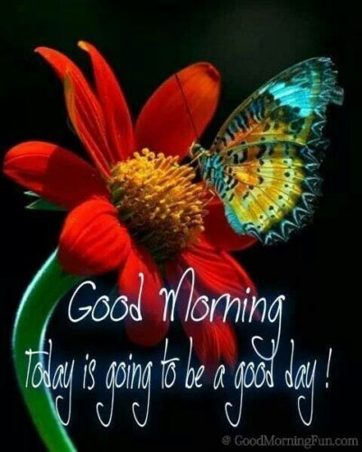Good Morning Day