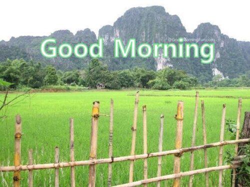 Good Morning Friends Hill Garden