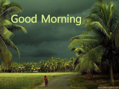 Good Morning with beautiful coconut trees