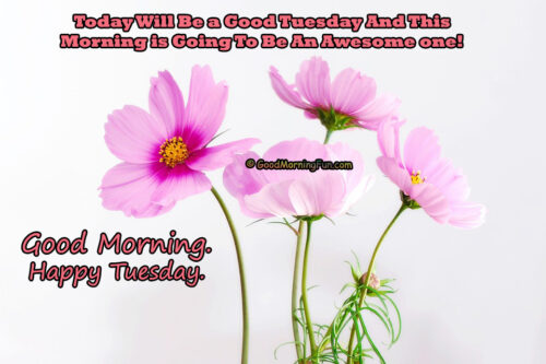 Good and Awesome Tuesday Quote