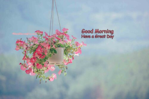 Hanging pot with pink plant - gud morning