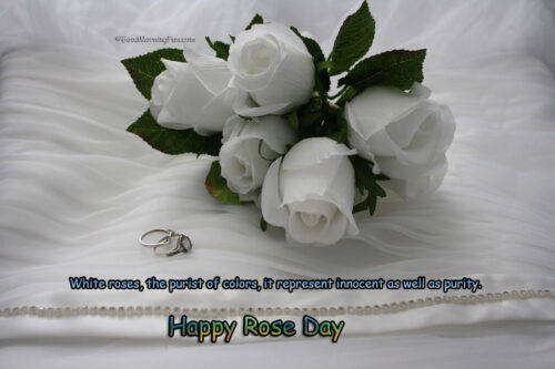 Happy Rose Day Pics - White Roses Wishes