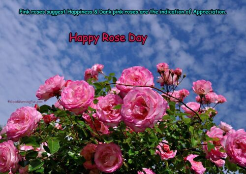 Happy Rose Day Quotes - Pink Roses
