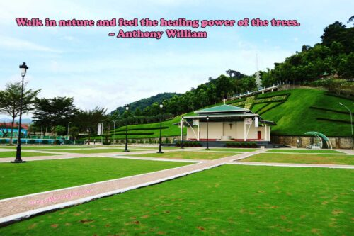 Nature Quotes - Walk in nature and feel the healing power of the trees