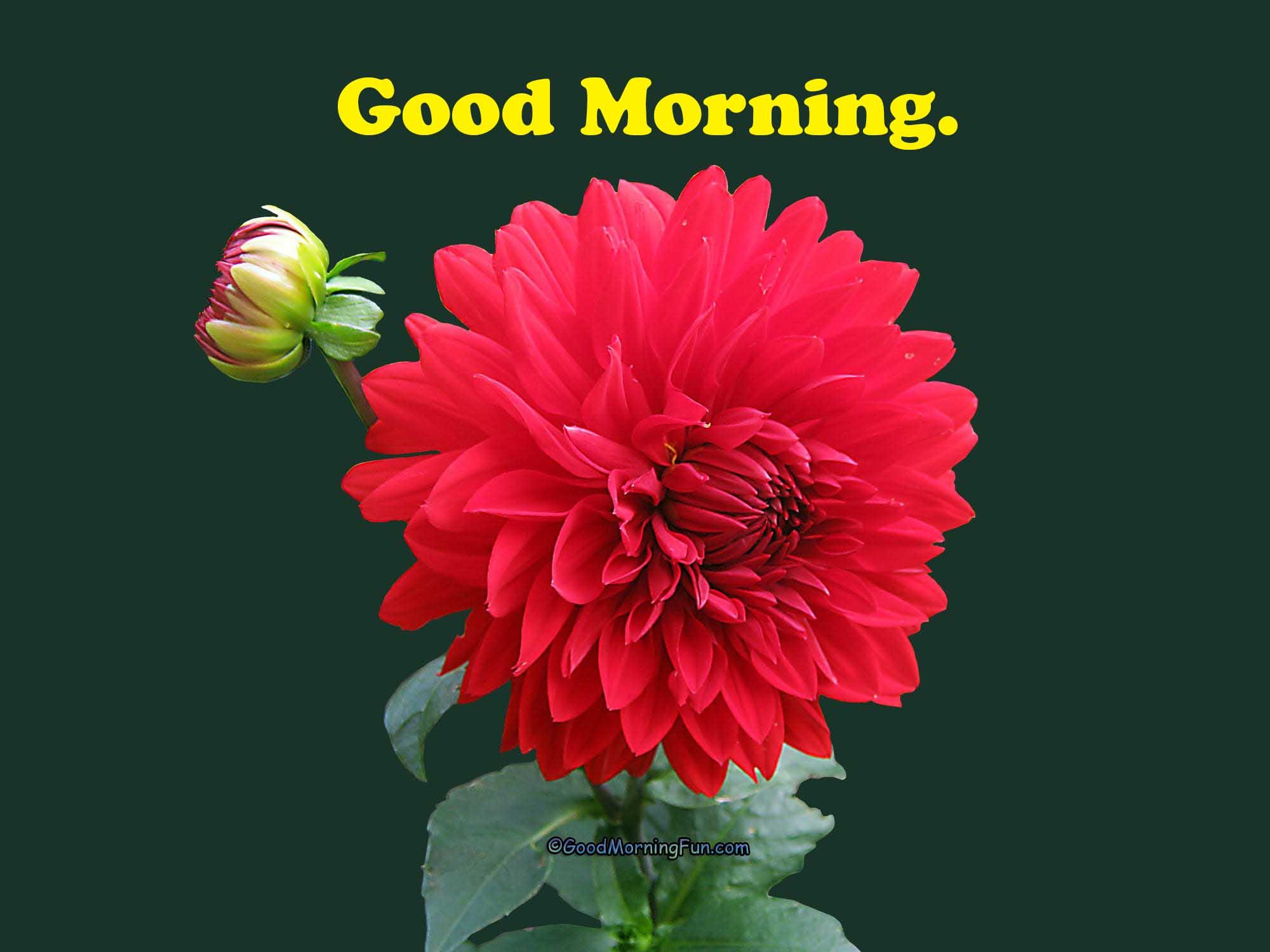 Good Morning Flowers Good Morning Fun