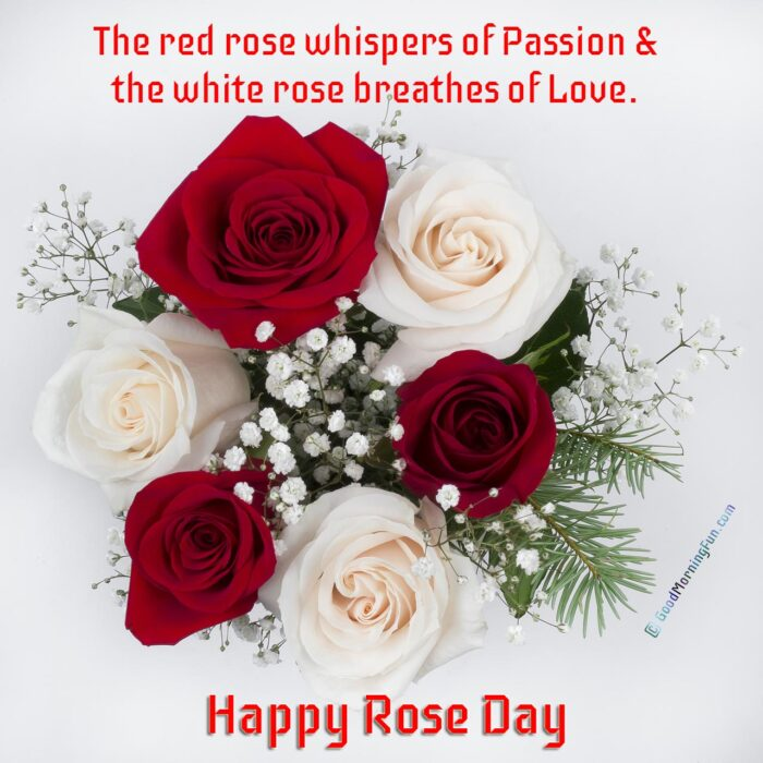 Red and White Rose Love Quotes