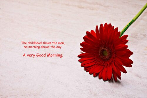 Single beautiful red flower - A very Good Morning