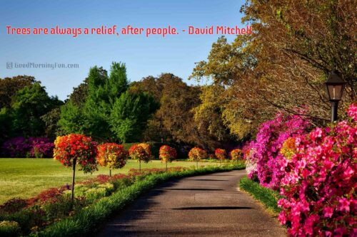 Trees are always a relief, after people - Nature Quotes