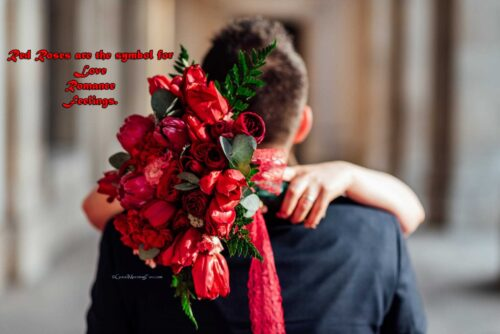 Rose Day Quotes - Red roses are the symbol for love, romance and feelings