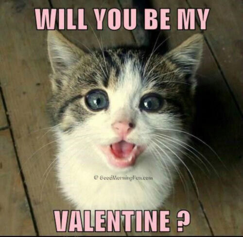 Will you be my Valentine - Valentines day Memes