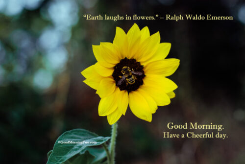 Beautiful Good Morning Wishes With Sun Flower and Bee