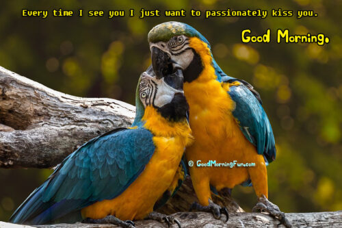 Every time I see you I just want to passionately kiss you - Good Morning Love Images