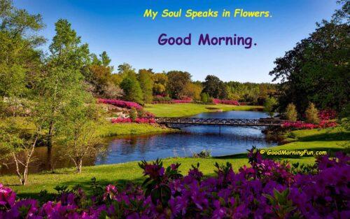Good Morning Flowers - My soul speaks in flowers