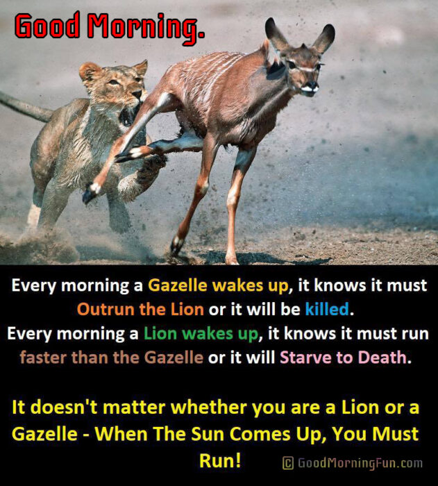 Good Morning Inspirational Quote about Life - Lion and Deer