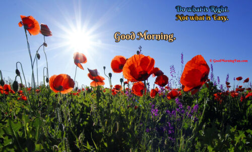 Good Morning Sunrise with Beautiful Flowers