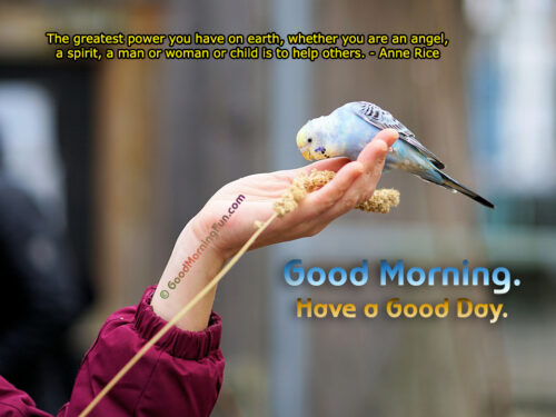 Help - Feed Birds - Good Morning