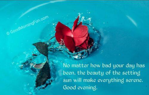 Good Morning Beautiful Rose