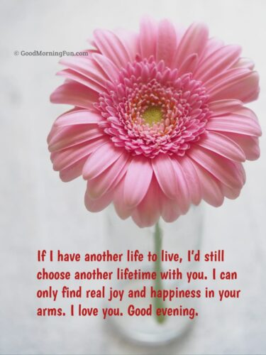 I love You - Good Evening Pink Rose
